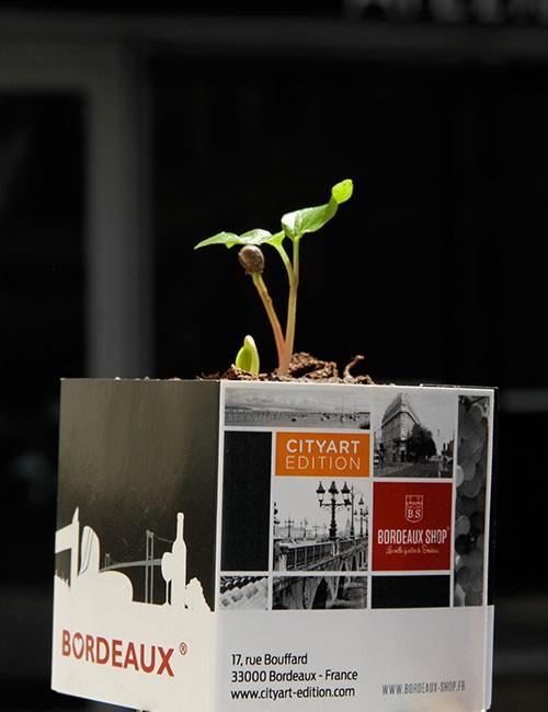 Cube végétal - vigne sauvage à faire germer